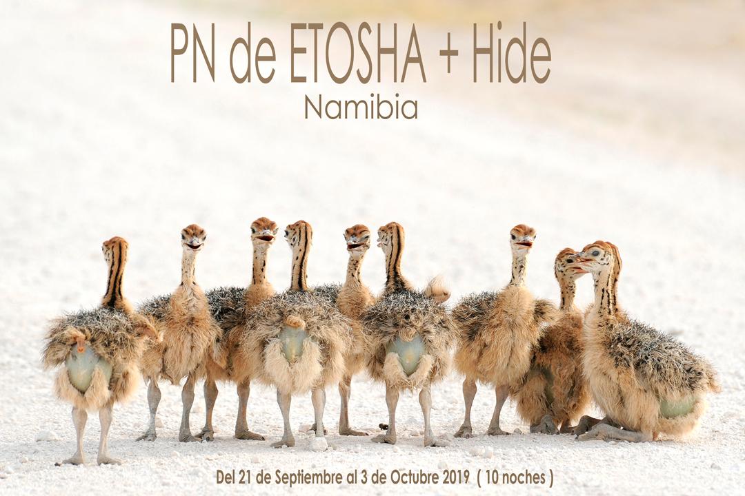 Safari fotográfico en Etosha, Namibia