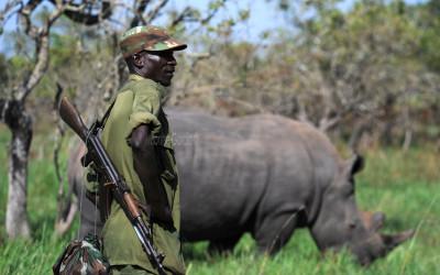 Leave rhinos alone!