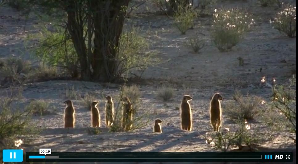 La vida en el Kalahari