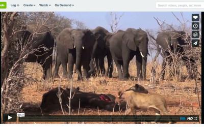 Recorriendo Botsuana salvaje