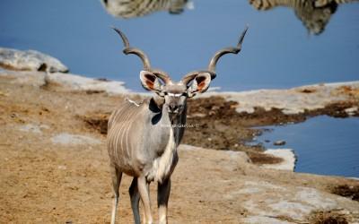 Fauna del parque de Etosha