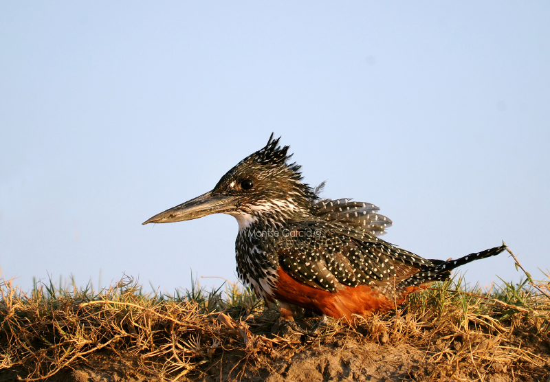 Próximo Safari Fotográfico: Botswana