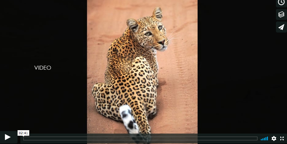 Safari en el PN Chobe
