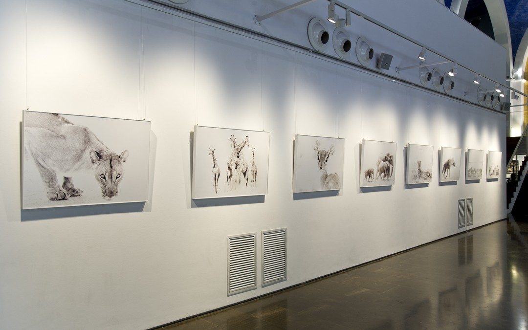 Exposición de fotografía, hasta el 8 de Junio