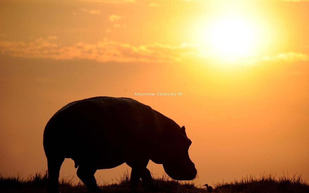 Safari Fotográfico en Botswana