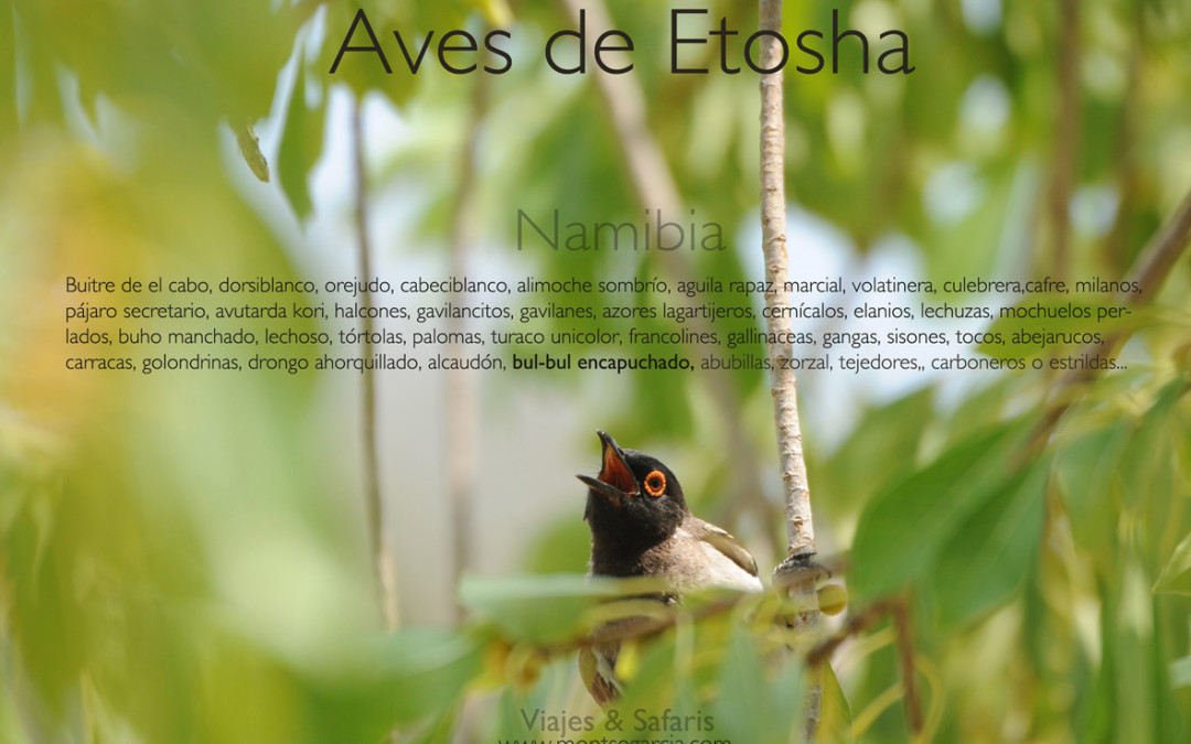 Aves del parque de Etosha